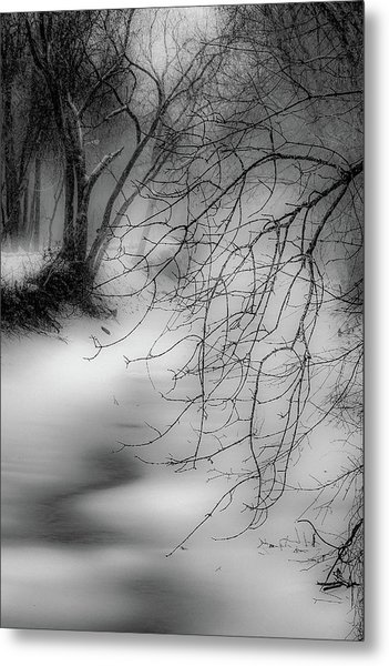 Foggy Feeder Metal Print