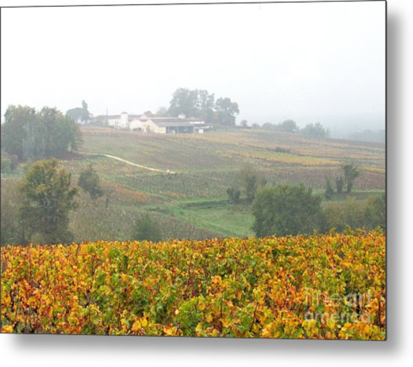 Foggy French Vineyard Metal Print
