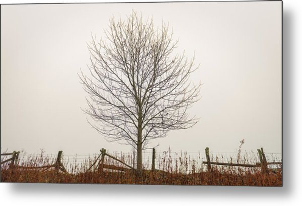 Foggy Lone Tree Hill Metal Print