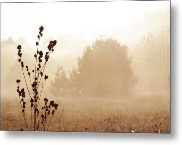 Metal Print featuring the photograph Foggy Meadow 2 by Scott Hovind