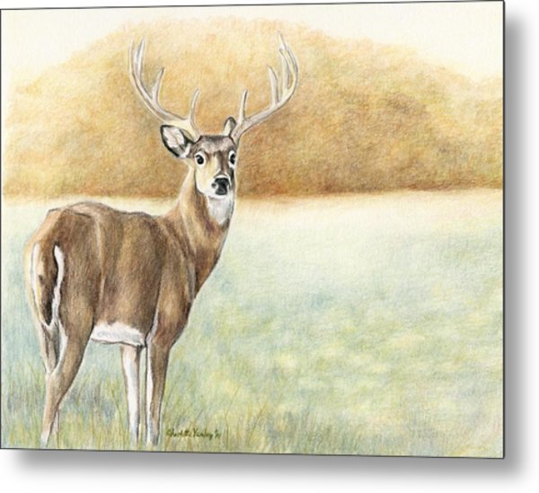 Foggy Morning Buck Metal Print by Charlotte Yealey