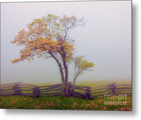 Foggy Tree And Fence In The Blue Ridge Metal Print