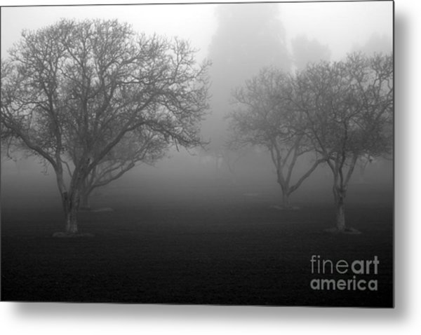Foggy Trees Metal Print