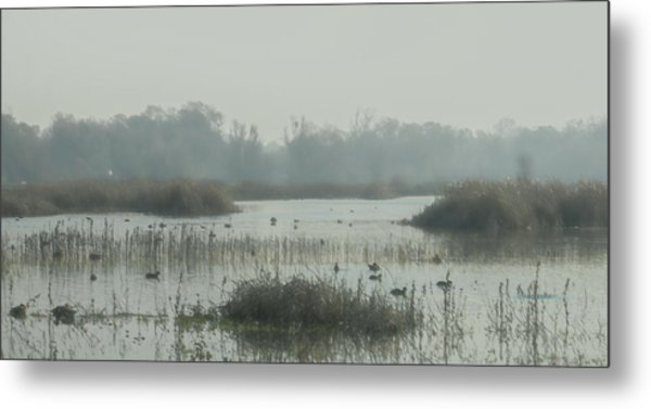 Foggy Wetlands Metal Print