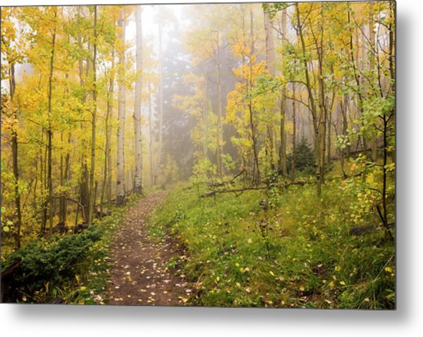 Foggy Winsor Trail Aspens In Autumn 2 - Santa Fe National Forest New Mexico Metal Print