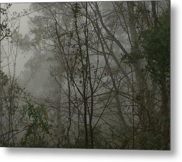 Foggy Woods Photo  Metal Print