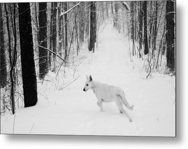 Following Ella Metal Print by Cheryl Helms