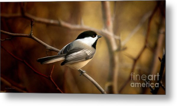 Following The Light Metal Print by Beve Brown-Clark Photography