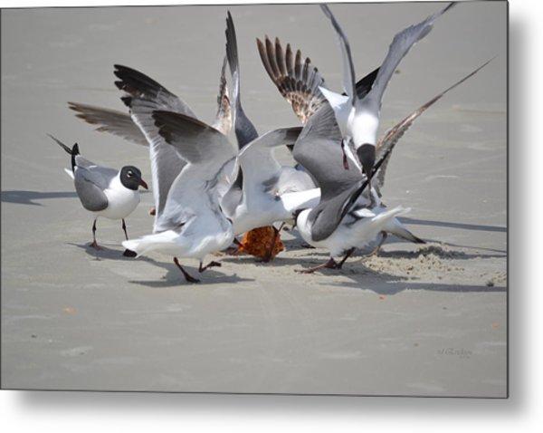 Food Fight - Gulls At The Beach Metal Print