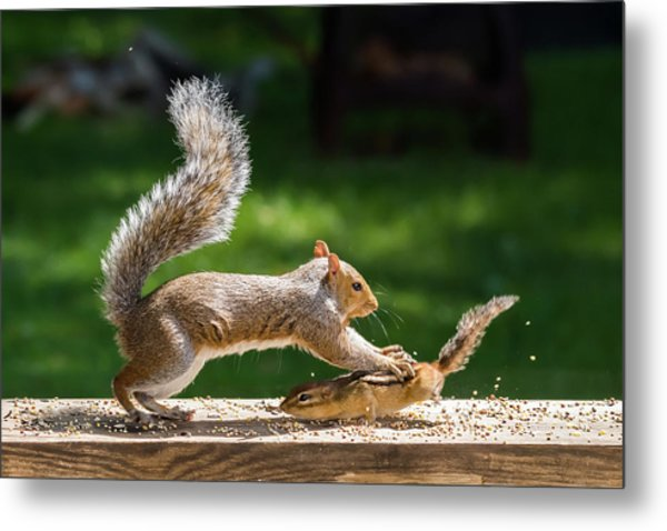 Food Fight Squirrel And Chipmunk Metal Print
