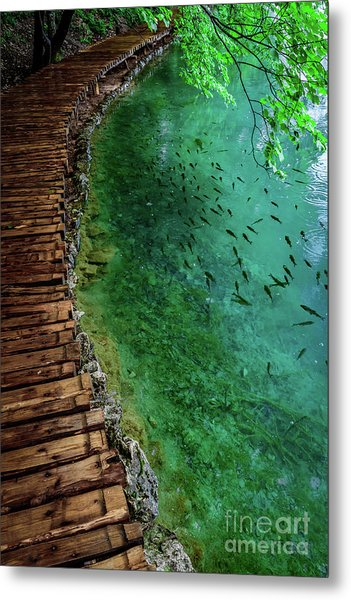 Footpaths And Fish - Plitvice Lakes National Park, Croatia Metal Print