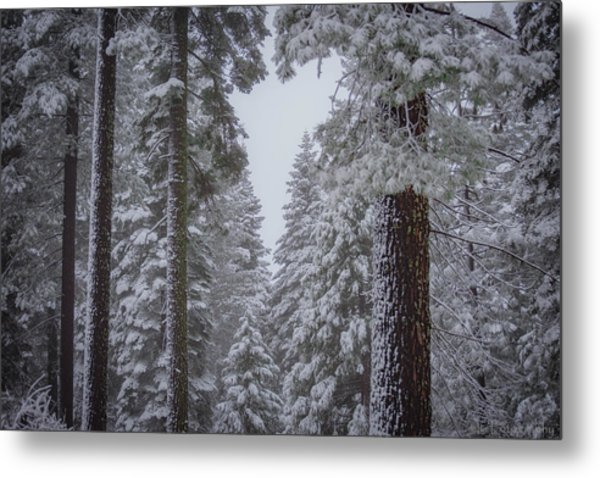 For The Love Of Snow Metal Print