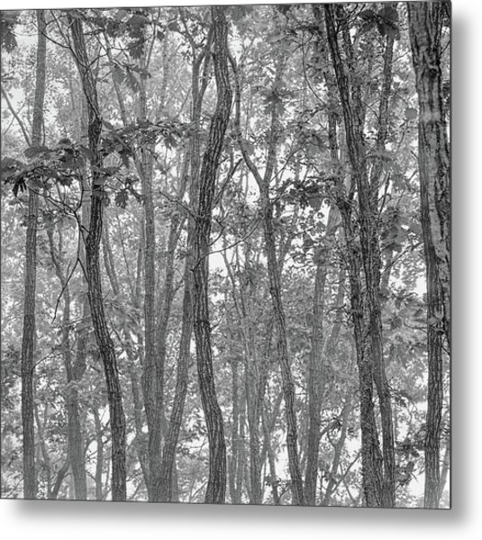 Forest #090 Metal Print