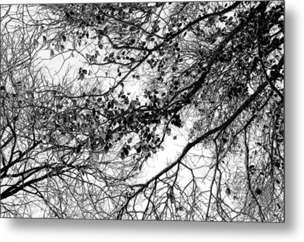 Forest Canopy Bw Metal Print
