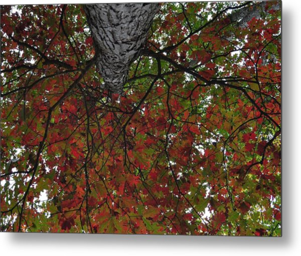 Forest Canopy Metal Print by JAMART Photography