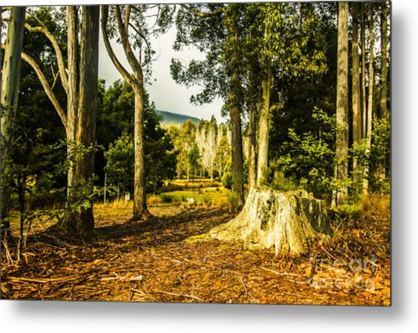 Forest Clearing In The Woods Metal Print
