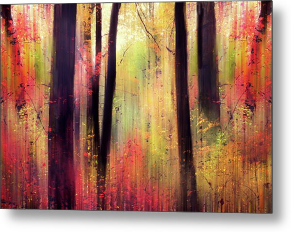 Metal Print featuring the photograph Forest Frolic by Jessica Jenney