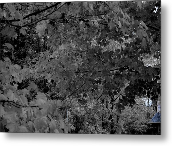 Forest Hut Metal Print