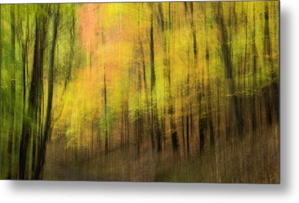 Metal Print featuring the photograph Forest Impressions by David Waldrop