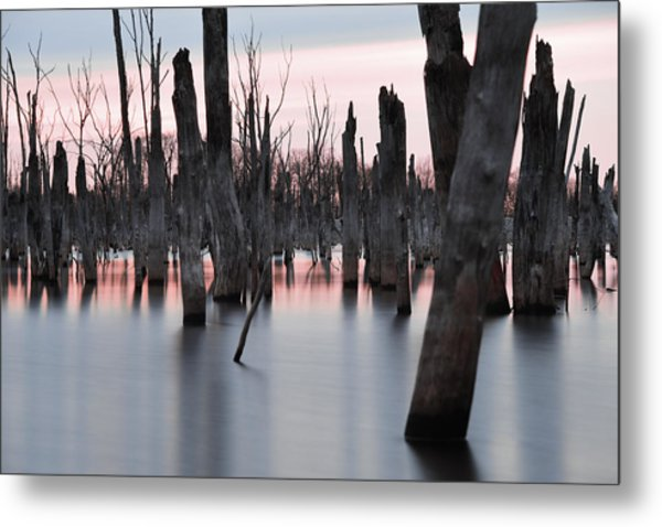 Forest In The Water Metal Print