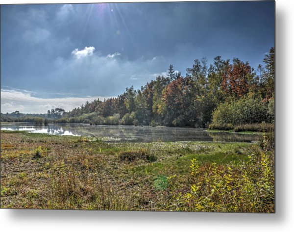 Forest Lake In Autumn Metal Print