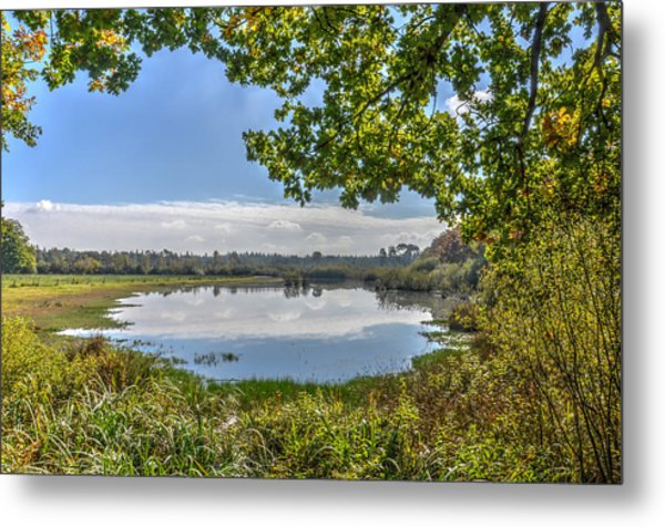 Forest Lake Through The Trees Metal Print