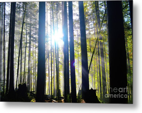 Forest Light Rays Metal Print
