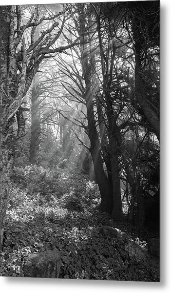 Forest Morning Metal Print by HW Kateley