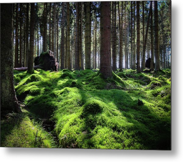 Forest Of Verdacy Metal Print