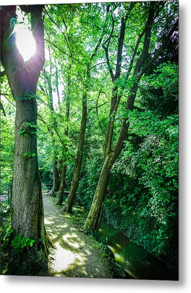 Metal Print featuring the photograph Forest Path by Bee-Bee Deigner