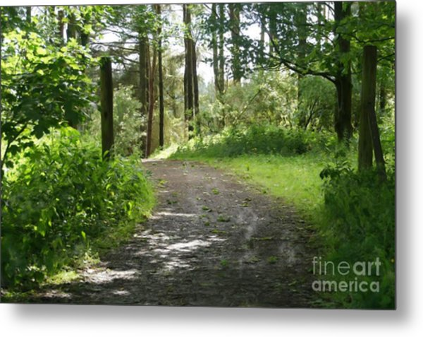 Forest Path. Metal Print
