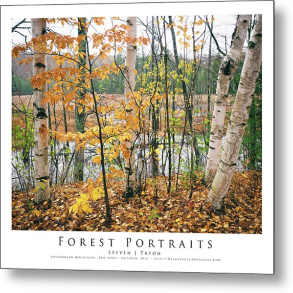 Forest Portraits Metal Print by Steven Tryon