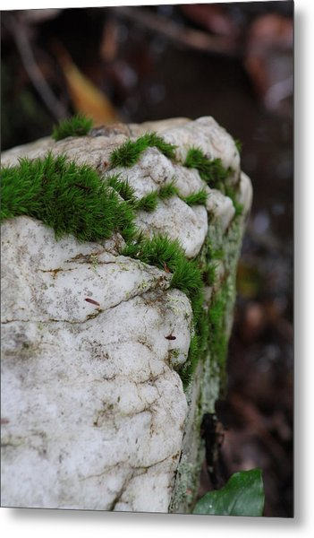Forest Rock With Moss Metal Print by Pamela Smith