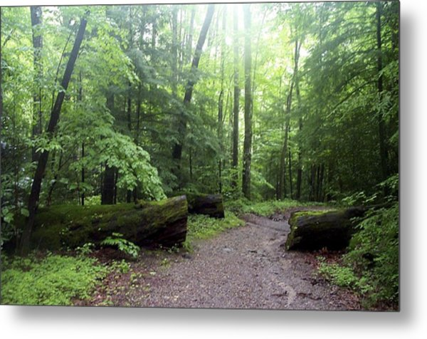 Forest Setting Smoky Mountains National Park Metal Print