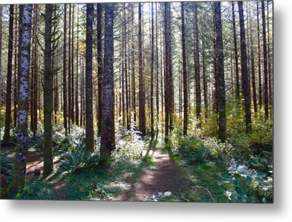 Forest Stroll Metal Print
