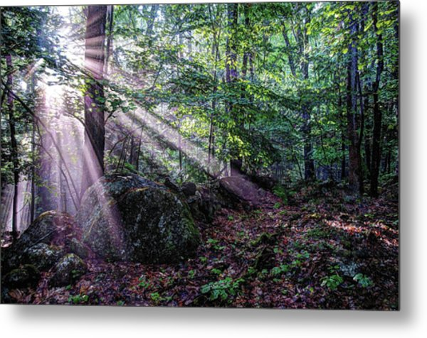 Forest Sunbeams Metal Print