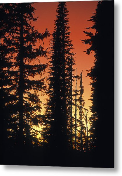 Forest Sunset Metal Print by Leland D Howard