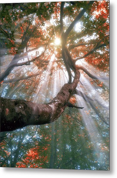 Forest With Fog And Sun Rays Metal Print