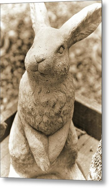Forever Buck Bunny Metal Print by JAMART Photography