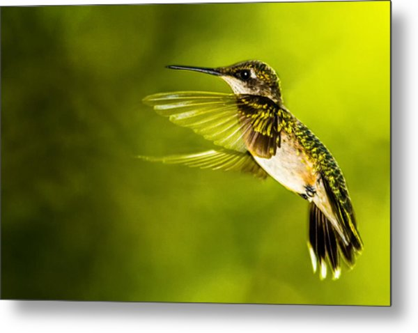 Forward Stroke - Hummingbird Metal Print