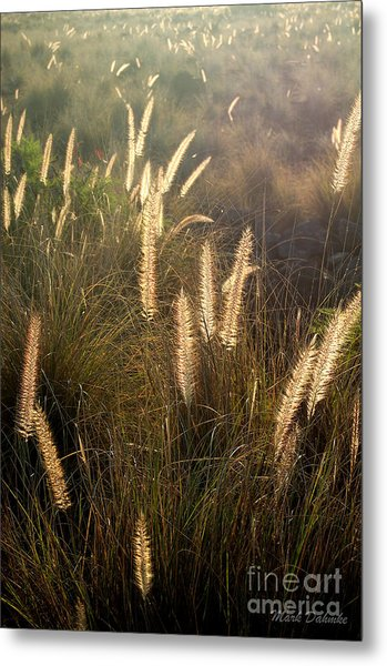 Fountain Grass Metal Print
