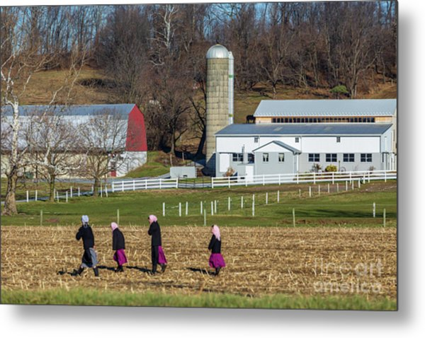 Four Amish Women In Field Metal Print