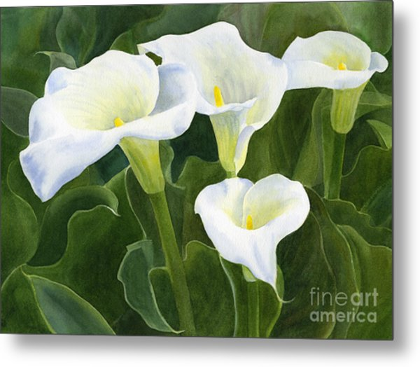 Four Calla Lily Blossoms With Leaves Metal Print