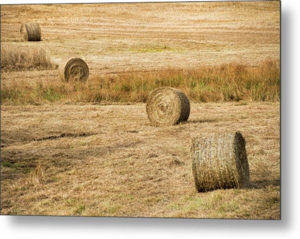 Four Hay Balls -  Metal Print