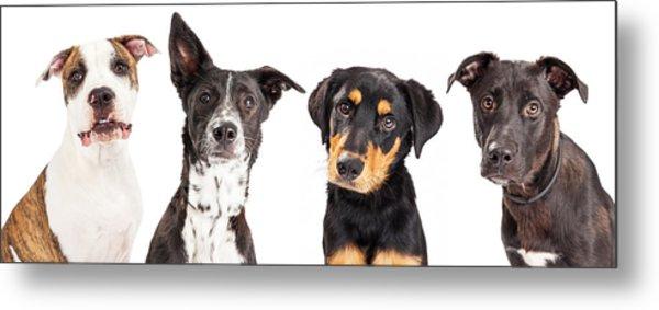Four Mixed Breed Dogs Closeup Metal Print