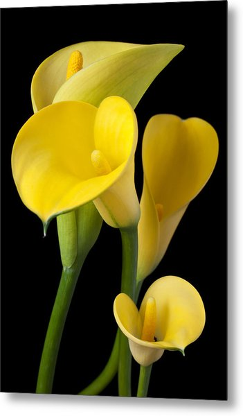 Four Yellow Calla Lilies Metal Print