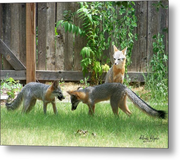 Fox Family Metal Print