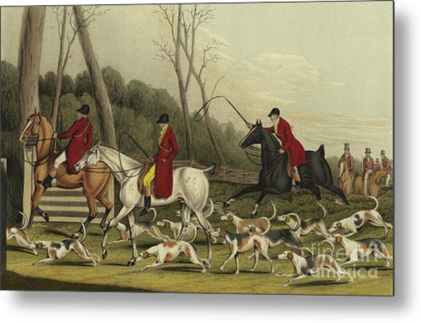 Fox Hunting Going Into Cover Metal Print