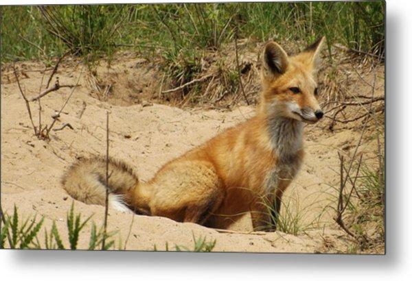 Fox In The Woods 2 Metal Print
