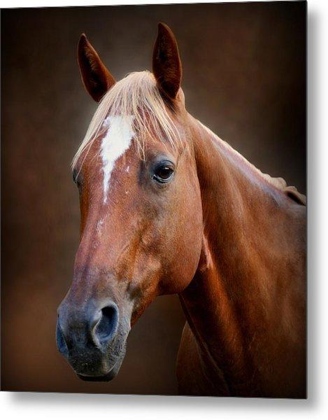 Fox - Quarter Horse Metal Print